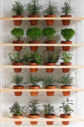 植被单体手绘图