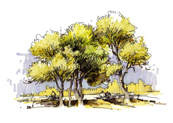 学习大师是如何手绘景观植物的