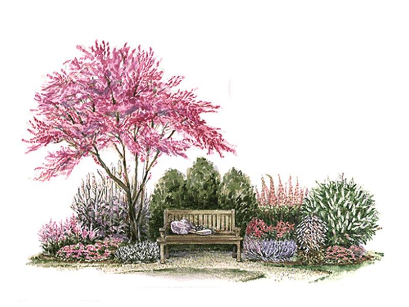 植物景观手绘【分享学习】