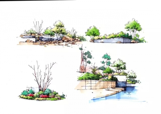 园林绘画植物单体分享展示图片